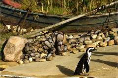 ANIMAL ART - PINGUINE (Bodypaintingmodell: Madeline / Fotografin: B. Gruene)