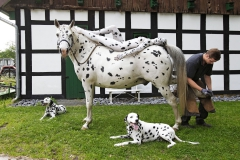 ANIMAL ART - PFERD (Bodypaintingmodell: Jessica / Fotograf: T. Skupin)