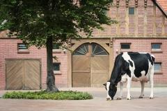 Kalendermotiv AGRARHOF für MASTERRIND GmbH