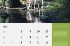 06_Juni_MASTERRIND-Kalender2016