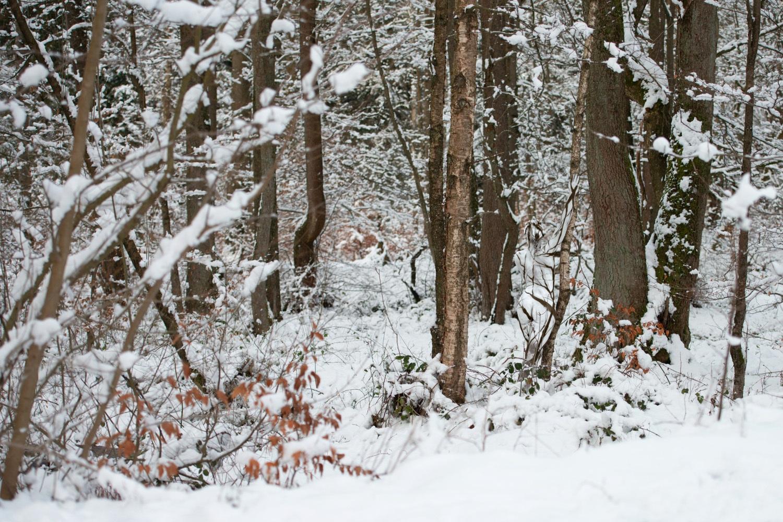 NATUREART Bodypainting SNOWSOLLING (Aktmodell: Darky / Projektfotograf: Carsten Dauer)