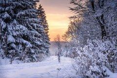 NATUREART Bodypainting SNOWTREES (Aktmodell: Darky / Projektfotograf: Carsten Dauer)