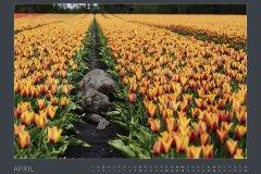 Kalender NATURE ART - BODYPAINTING IN NATURE 2022