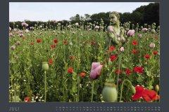 Kalender NATURE ART - BODYPAINTING IN NATURE 2022 - Juli
