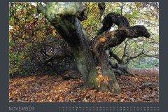 Kalender NATURE ART - BODYPAINTING IN NATURE 2022 - November