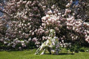 magnolien_8516-1000