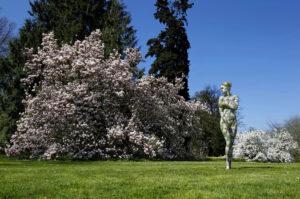 magnolien_8564-1000
