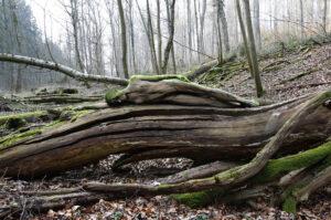 spaltenbaum_6850-1000