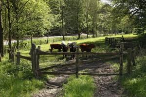 Weidetor / Pasture Gate