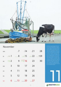 11_November_MASTERRIND-Kalender2016