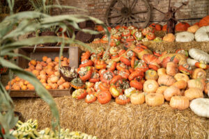 NATURE ART – PUMPKINS