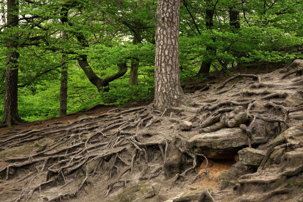 Künstler Jörg Düsterwald bemalt Personen so passend mit Körperfarbe, dass sie sich in die Umgebung einfügen. Hier liegt das nackte Aktmodell zwischen den Wurzeln eines nahestehenden Baumes im Wald.